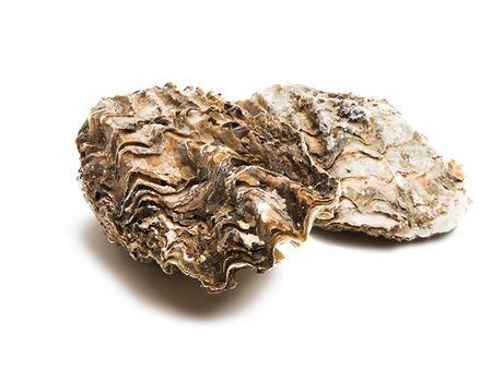 Gillardeau Auster